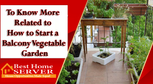 To Know More Related to How to Start a Balcony Vegetable Garden